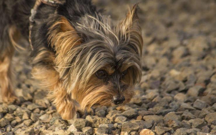 Quali sono i bisogni del cane? Parte 2 – I bisogni sociali, emozionali e mentali.