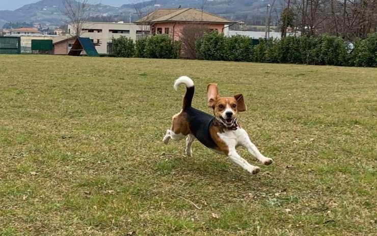 Il senso di accettazione nella relazione con il cane
